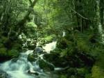 medium_ecologie-spirituelle.jpg