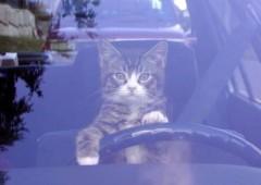 chat_voiture.jpg