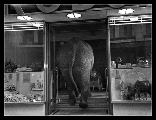 elephant-thumb.jpg